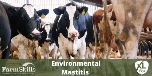 Environmental Mastitis