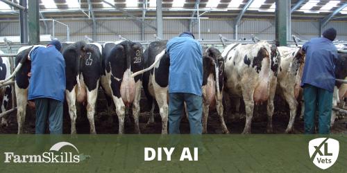 DIY Artificial Insemination (AI)